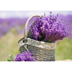 CARPEX – Lavender 50 ml Micro, prostorová vůně